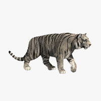 3d white tiger fur animation