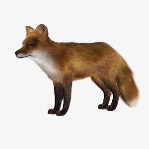 red fox 3d model