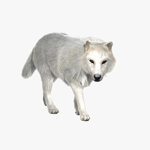 3d model arctic fur animation wolf