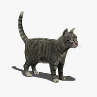 cat mackerel tabby fur 3d model