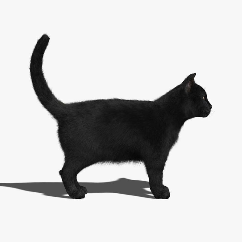 3d black cat fur model
