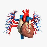 Human Heart (Textured) 3D Model