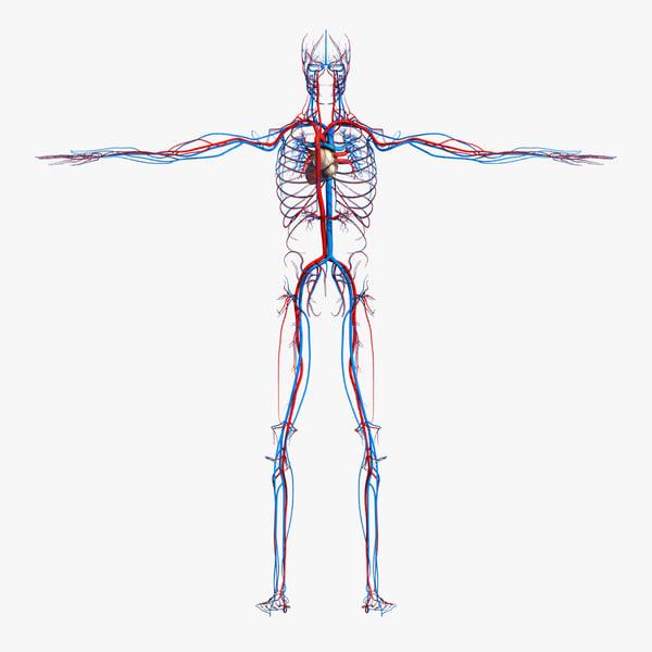 max medically circulatory