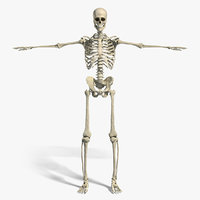 Anatomy - Skeletal System (Textured)
