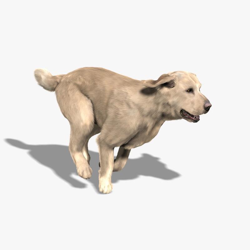 labrador retriever fur animations 3d model