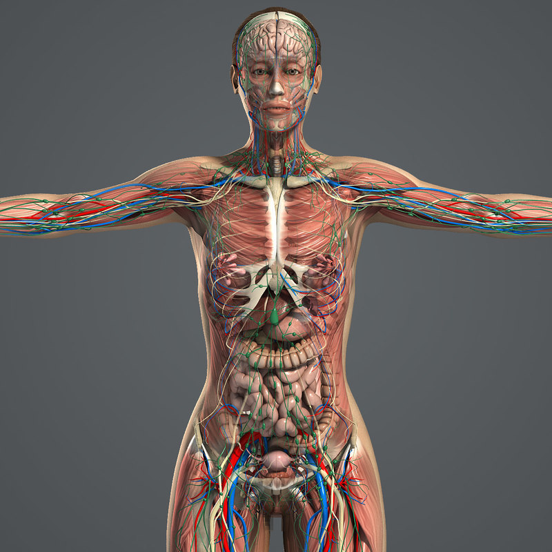obj complete female anatomy