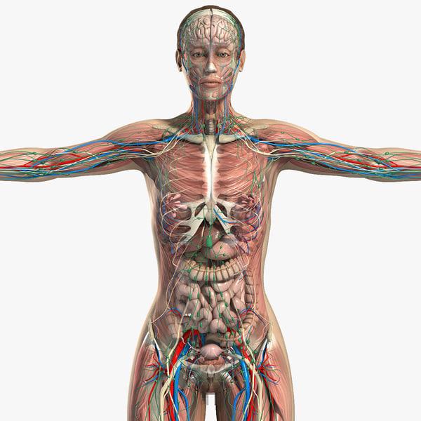 obj complete female anatomy