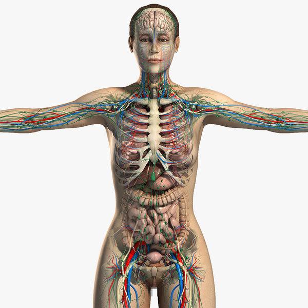 3d essential female anatomy model