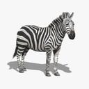 Zebra 3D models