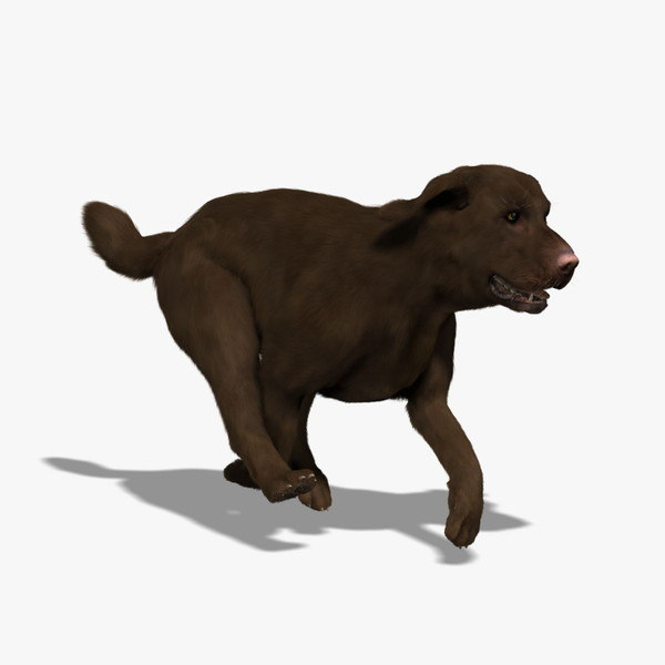 labrador chocolate - fur 3d model