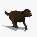 Labrador 3D models