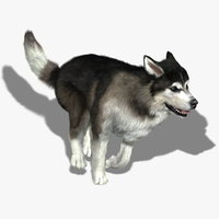 Siberian Husky (FUR) (ANIMATED)