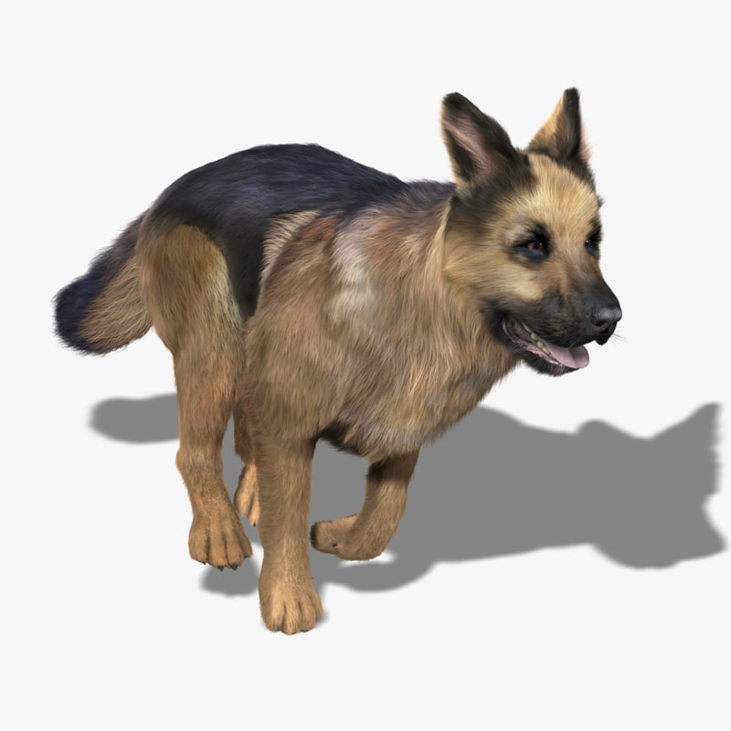 german shepherd fur animations 3d model