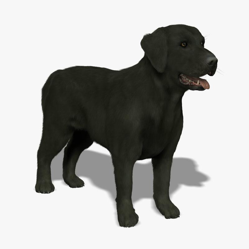 labrador black dog - 3d model