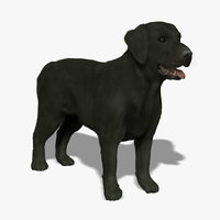 labrador black dog - 3d model