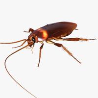 3d american cockroach - periplaneta
