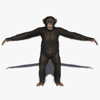 Chimp (2) (FUR)