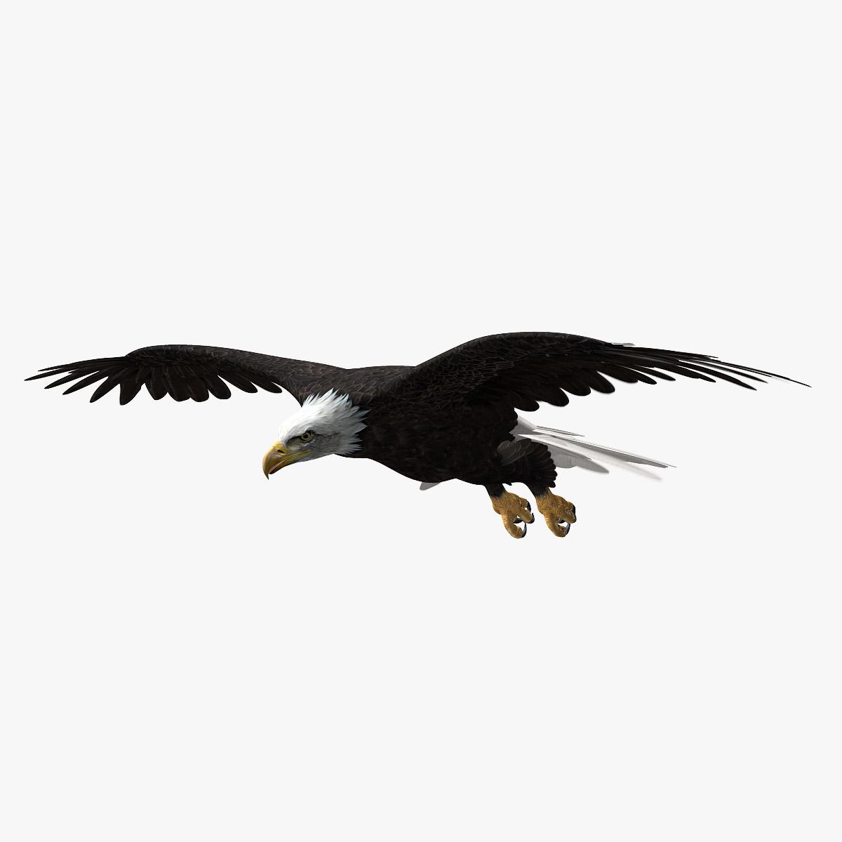 3d american bald eagle animation model