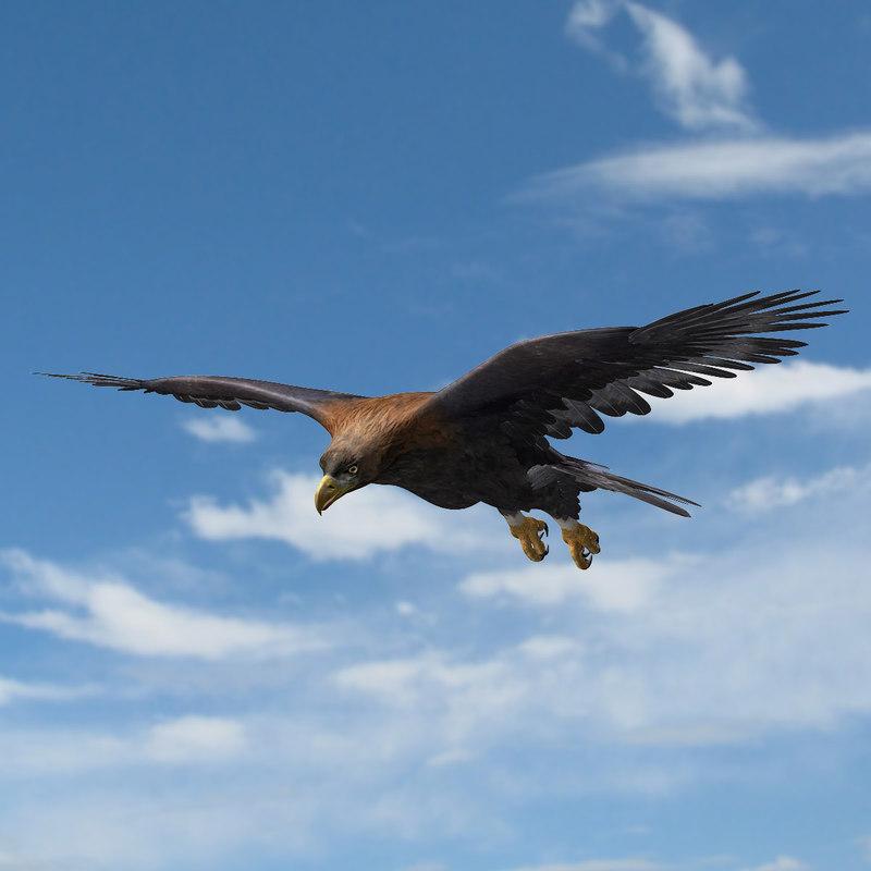golden eagle animation 3d ma