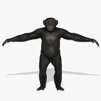 chimp fur 3d ma