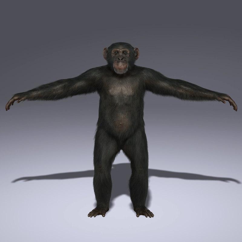 chimp fur 3d ma