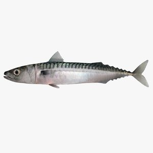 3ds mackerel fish