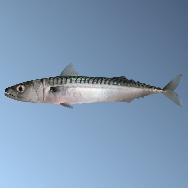 3ds mackerel fish