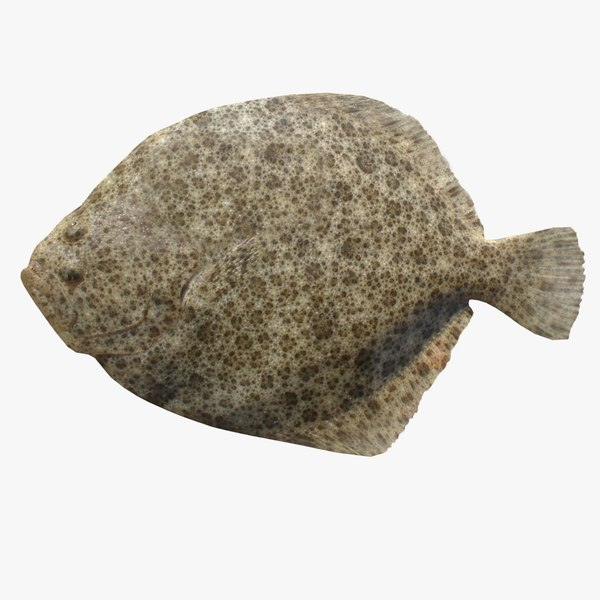 3ds max turbot flatfish