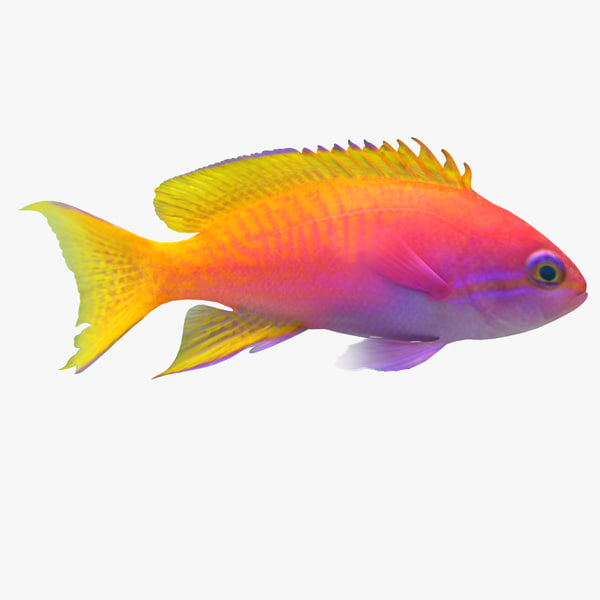 3d neon anthias fish