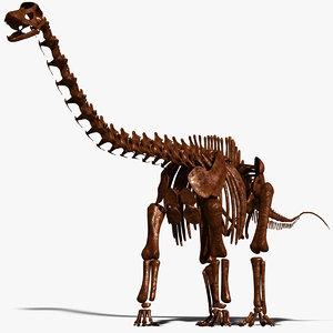 3d dino skeleton diplodocus bones