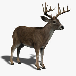 deer fur 3d obj