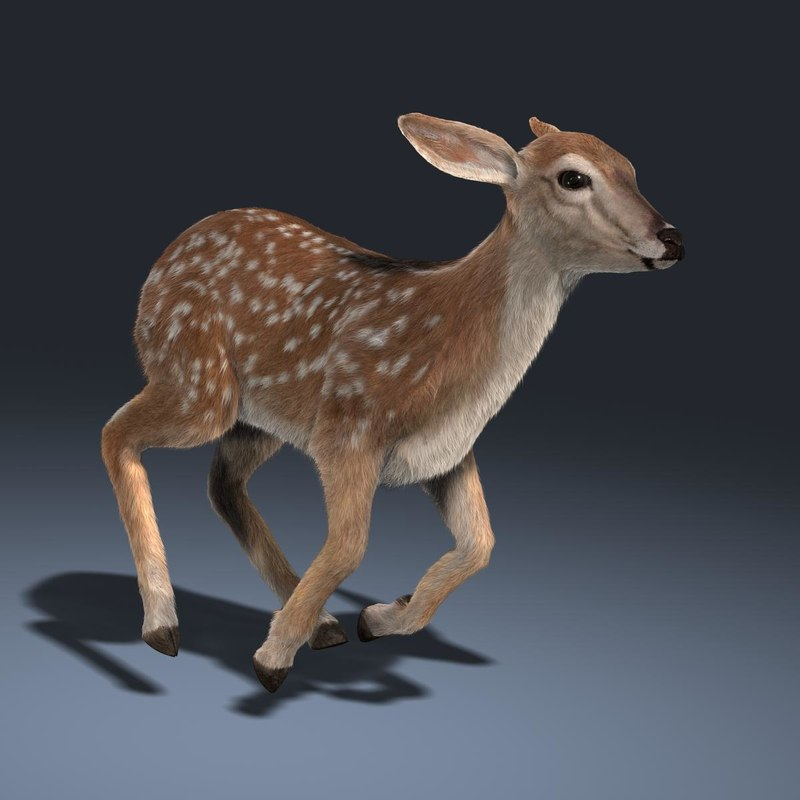 3d model fawn fur animation