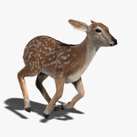 Fawn (FUR) (ANIMATED)
