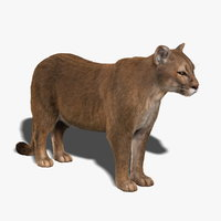 Cougar (FUR)