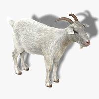 Goat (1) (FUR)