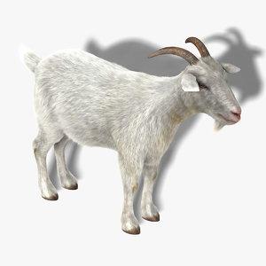 3d model goat fur hair