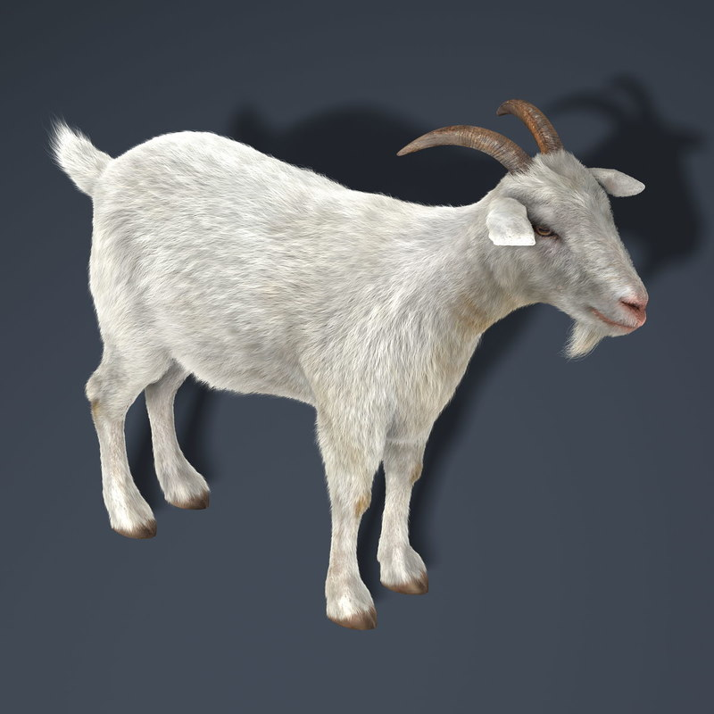 3d model goat fur hair