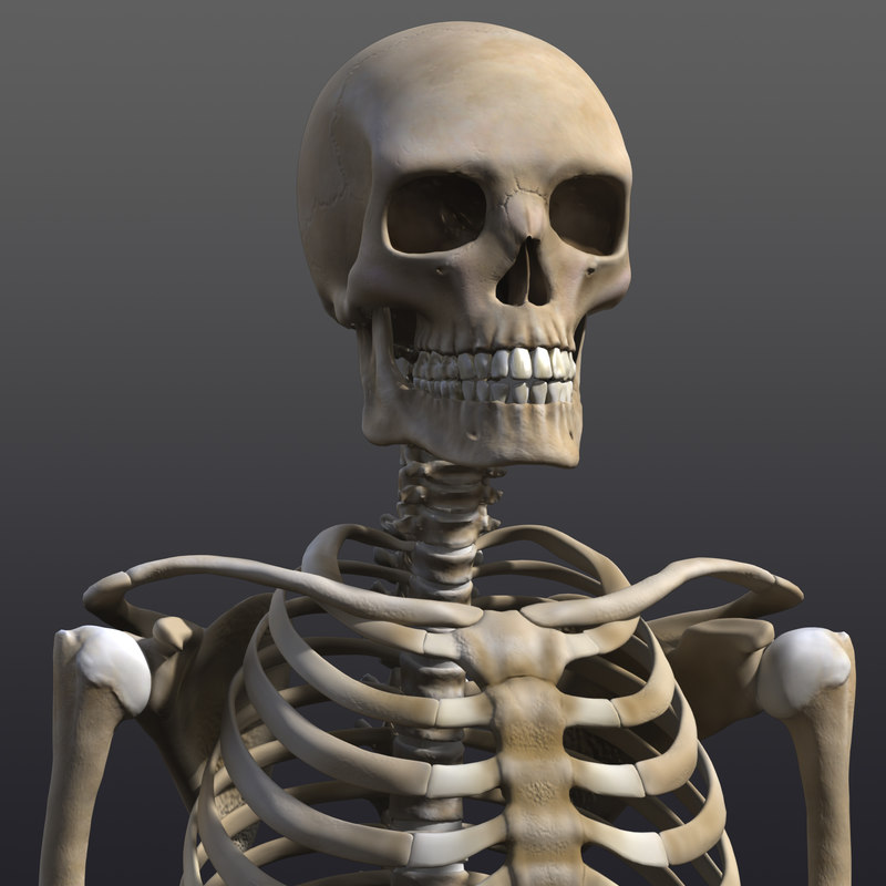 skeleton 3d xsi, Skeleton