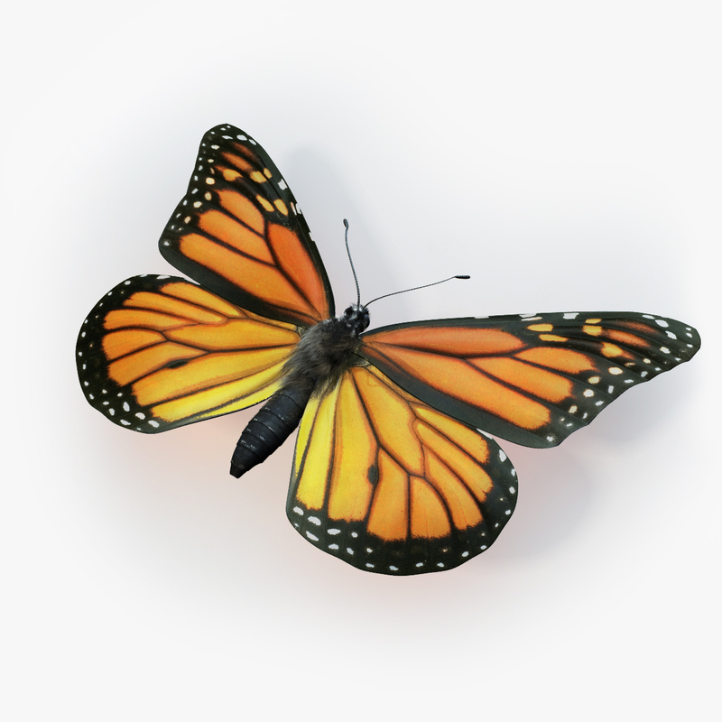 monarch butterfly max