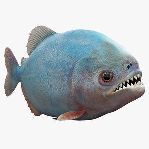 3d piranha modelled