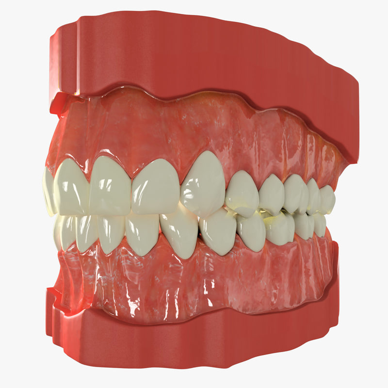 3ds max human teeth