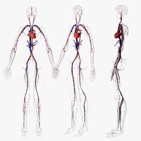 Circulatory System(1)