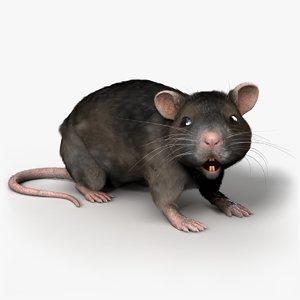 rat rigged max