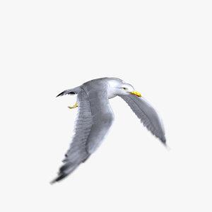 seagull animator ma