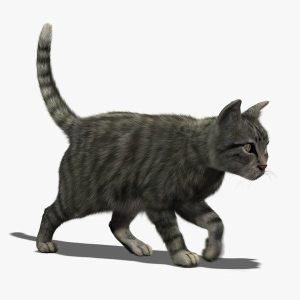 maya cat mackerel tabby fur