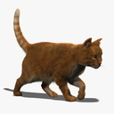 housecat 3D models