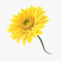 3d flower gerbera model