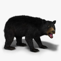 max black bear rigged -