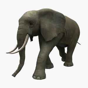 max elephant animation
