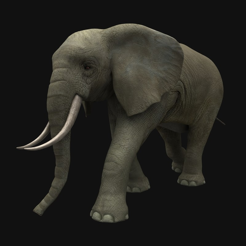 max elephant animation